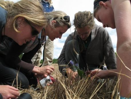 Get involved with permaculture research