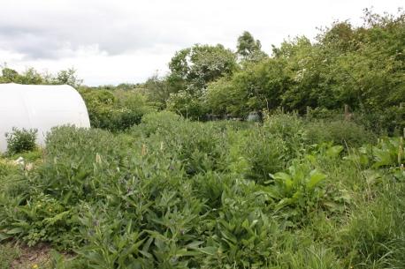 abundant earth veg garden