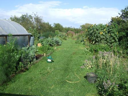 Foxfield Self Seeding Vegetable Garden