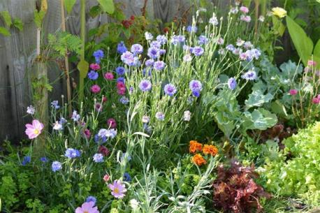 Mixed beds flowers and vegetables