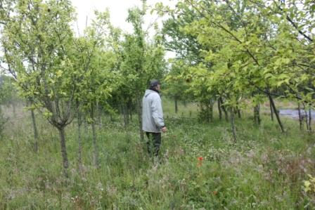 A view of the orchard