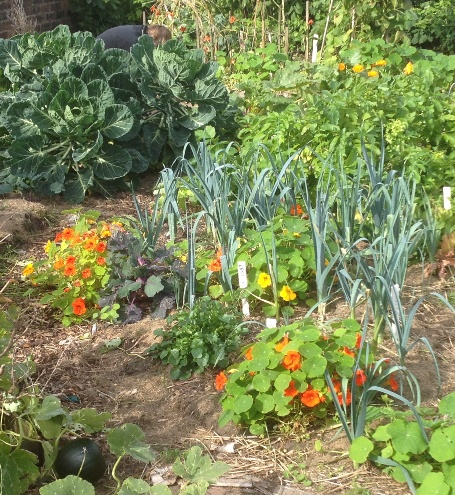 Mixed vegetables and beneficial flowers