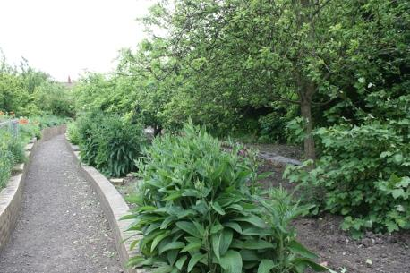 edge of a forest garden at Scotswood